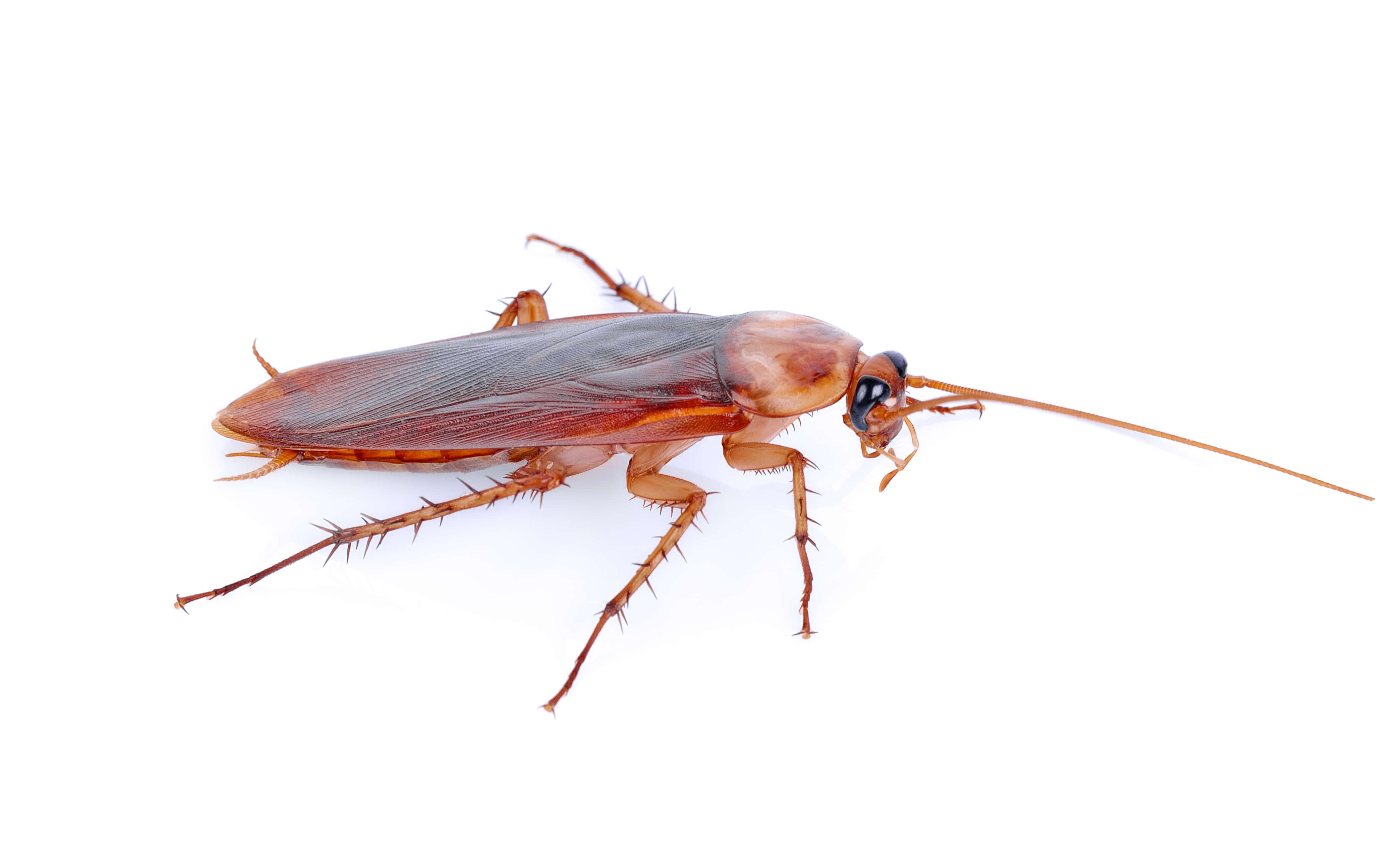 Κατσαρίδες και απολύμσνση